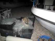 Widok rybak łodzie Obraz Royalty Free