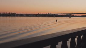 Widok rzeka w wiosna wieczór sceniczny zmierzch zbiory wideo