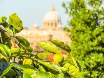Widok Rzym, Włochy i St Peter ` s, bazylika, Watykan obrazy royalty free