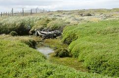 Widok Seno Otway Chile - Patagonia - Zdjęcie Stock