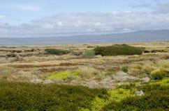 Widok Seno Otway Chile - Patagonia - Zdjęcia Stock