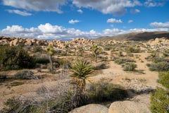 Widok skalisty pustynia krajobraz Joshua drzewa park narodowy blisko Białego Cysternowego obozowiska, fotografia stock