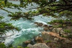 Widok skalisty wybrzeże Atlantycki ocean przez gałąź iglaści drzewa USA Mężczyzny Acadia park narodowy zdjęcie royalty free