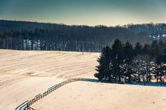 Widok sosny w śnieżystym rolnym polu w wiejskim Jork Co Zdjęcie Stock