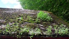Widok stary dach dach z mech zbiory