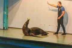 Widok stary Moskwa Dolphinarium Obrazy Royalty Free