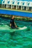 Widok stary Moskwa Dolphinarium Fotografia Stock