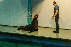 Widok stary Moskwa Dolphinarium Zdjęcie Royalty Free