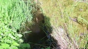 Widok strumyczek, strumyk, streamlet Wioski rzeka zdjęcie wideo
