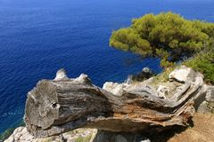 Widok suchy drzewo przeciw tłu wodny Lopud, Chorwacja panorama zdjęcia stock