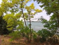 Widok synkliny drzewa obrazy stock