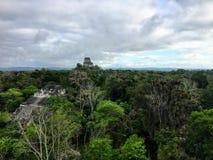 Widok szeroka zwarta dżungla Tikal park narodowy na zewnątrz Flores, Gwatemala, w środkowym Ameryka zdjęcia royalty free