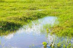 Widok trawa i kałuża zdjęcia stock