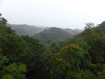 Widok tropikalny las deszczowy Obrazy Royalty Free