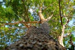 Widok up spod spodu drzewo na wybranej ostrości Fotografia Stock