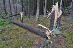 Widok uszkadzający wiatrem las, południowa cyganeria Zdjęcie Stock