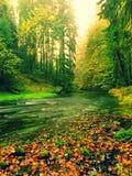 Widok w jesieni halną rzekę z zamazanymi fala, świeżymi zielonymi mechatymi kamieniami i głazami na brzeg rzeki zakrywającym z ko Obraz Royalty Free