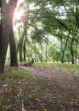 Widok w miasto parku Kherson Ukraina obraz royalty free