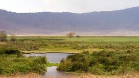 Widok waterhole w Ngorongoro kraterze Obrazy Stock