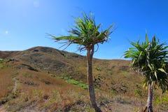 Widok wewnętrzny krajobraz wyspa Fiji zdjęcie royalty free