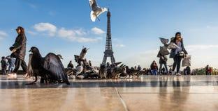 Widok wieża eifla od Trocadero Fotografia Stock