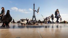 Widok wieża eifla od Trocadero Zdjęcie Royalty Free