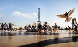 Widok wieża eifla od Trocadero Zdjęcia Royalty Free