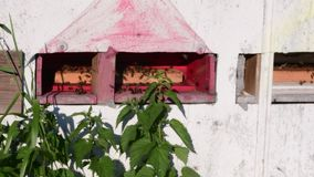 Widok wiejski ul Poruszające pszczoły przed ulem zbiory