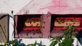 Widok wiejski ul Poruszające pszczoły przed ulem zdjęcie wideo