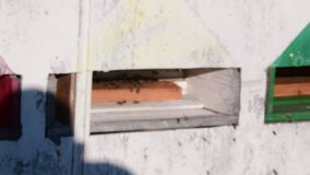 Widok wiejski ul Poruszające pszczoły przed ulem Depresja DOF zdjęcie wideo