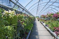 Widok wiele piękne obwieszenie rośliny w szklarni Zdjęcie Stock