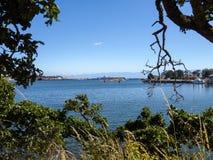 Widok Wiktoria kolumbiowie brytyjska przez krzaków i drzew Fotografia Royalty Free
