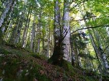 Widok wysocy drzewa w lesie obraz royalty free