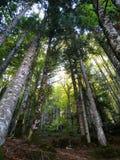 Widok wysocy drzewa w lesie zdjęcia stock