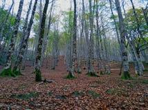 Widok wysocy drzewa w lesie zdjęcie stock
