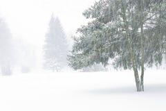 Widok z świerczynami przez przesłona śnieżycy obraz royalty free