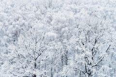 Widok z lotu ptaka śnieżyści dębu i brzozy drzewa obrazy royalty free
