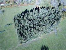Widok z lotu ptaka świerkowa plantacja i pyrenean łąka, Francja obraz stock