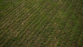Widok z lotu ptaka bagno ląduje blisko rzecznej doliny zdjęcie wideo