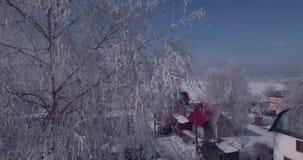 Widok z lotu ptaka bielu mróz na drzewa zamarzniętych wierzchołkach w wsi lot nad treetop 4K zbiory