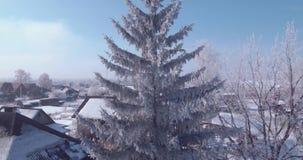 Widok z lotu ptaka bielu mróz na drzewa zamarzniętych wierzchołkach w wsi lot nad treetop 4K zdjęcie wideo
