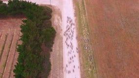 Widok z lotu ptaka cakle na odludzie drodze zbiory