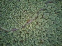 Widok z lotu ptaka Curonian mierzeja zdjęcia royalty free