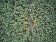 Widok z lotu ptaka Curonian mierzeja zdjęcie stock