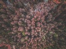 Widok z lotu ptaka czerwonej świerczyny las Zdjęcia Stock