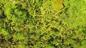 Widok Z Lotu Ptaka: Dżungla z drzewkami palmowymi Zdjęcia Royalty Free