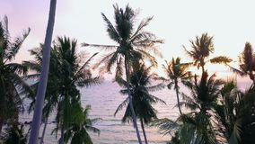 Widok Z Lotu Ptaka Denny brzeg z drzewkiem palmowym przy zmierzchem Tropikalna wybrzeże linia z Seascape zbiory wideo