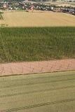 Widok z lotu ptaka dorośnięcie podskakuje w chmielu ogródzie Obraz Royalty Free