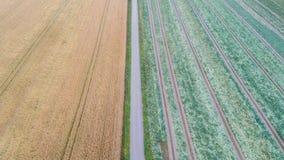 Widok z lotu ptaka droga zieleń i, kolorów żółtych pola zdjęcie stock