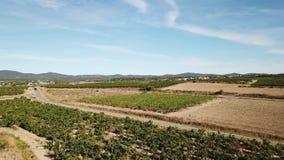 Widok z lotu ptaka francuski winnica w Herault, Francja zbiory wideo